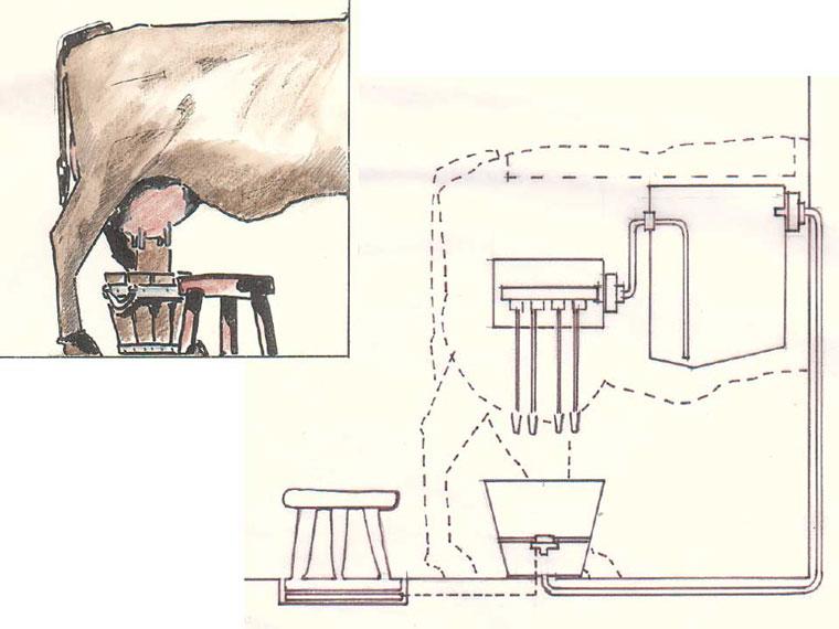 Exponat »melk die Kuh!«